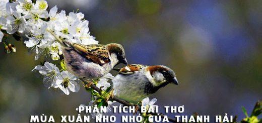 phan tich bai tho mua xuan nho nho cua thanh hai 520x245 - Phân tích bài thơ Mùa xuân nho nhỏ của Thanh Hải - Văn mẫu lớp 9