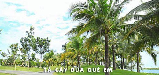 ta cay dua nha em 520x245 - Tả cây dừa quê em - Văn mẫu lớp 4