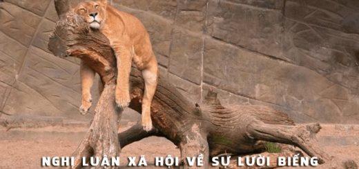 nghi luan xa hoi ve su luoi bieng 520x245 - Nghị luận xã hội về sự lười biếng - Văn mẫu lớp 9