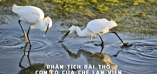 phan tich bai tho con co che lan vien 520x245 - Phân tích bài thơ Con cò của Chế Lan Viên