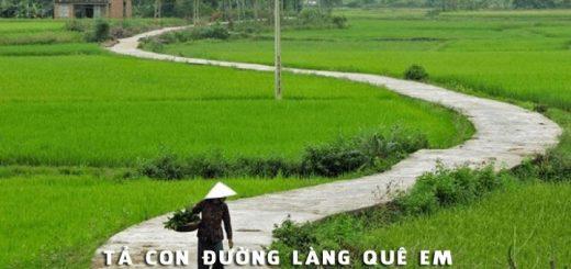 ta con duong lang que em 520x245 - Tả con đường làng quê em - Văn mẫu lớp 6